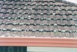 Na streche rastie mach alebo pleseň